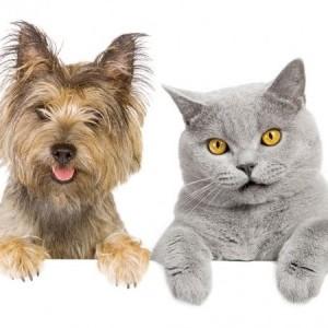 Кошка и щенок. Как подружить кошку с щенком?